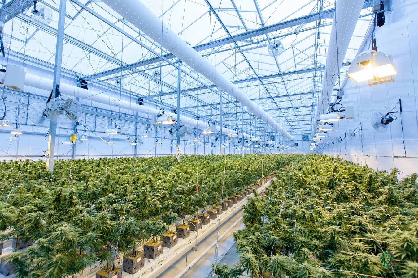 Generic Cannabis Indoor Cultivation Facility