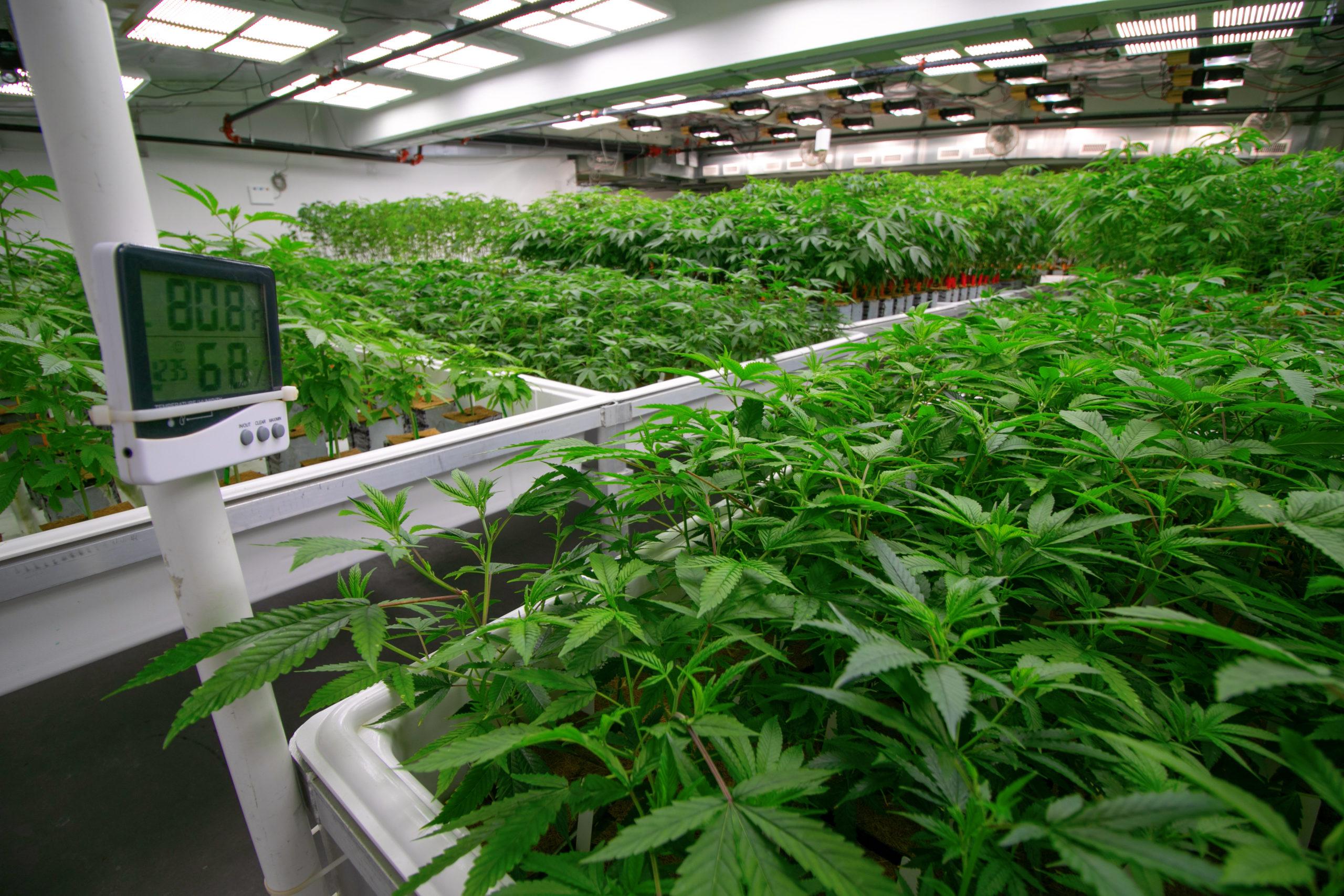 Generic Indoor Cannabis Cultivation